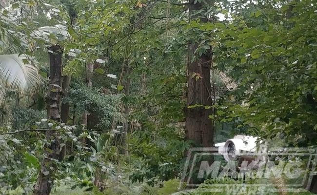 Jungle Falcon